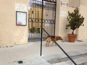 cane-cimitero3